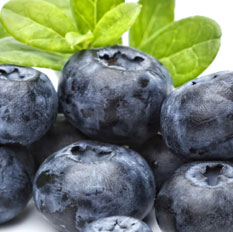 Blueberry Flavour Concentrate